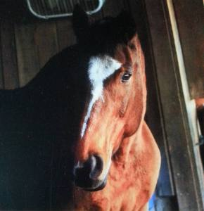 Horse's face