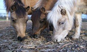 Ponies - Facebook Main