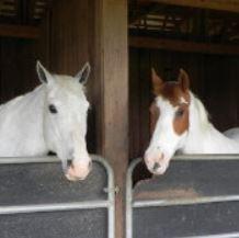 Two horses thumbnail